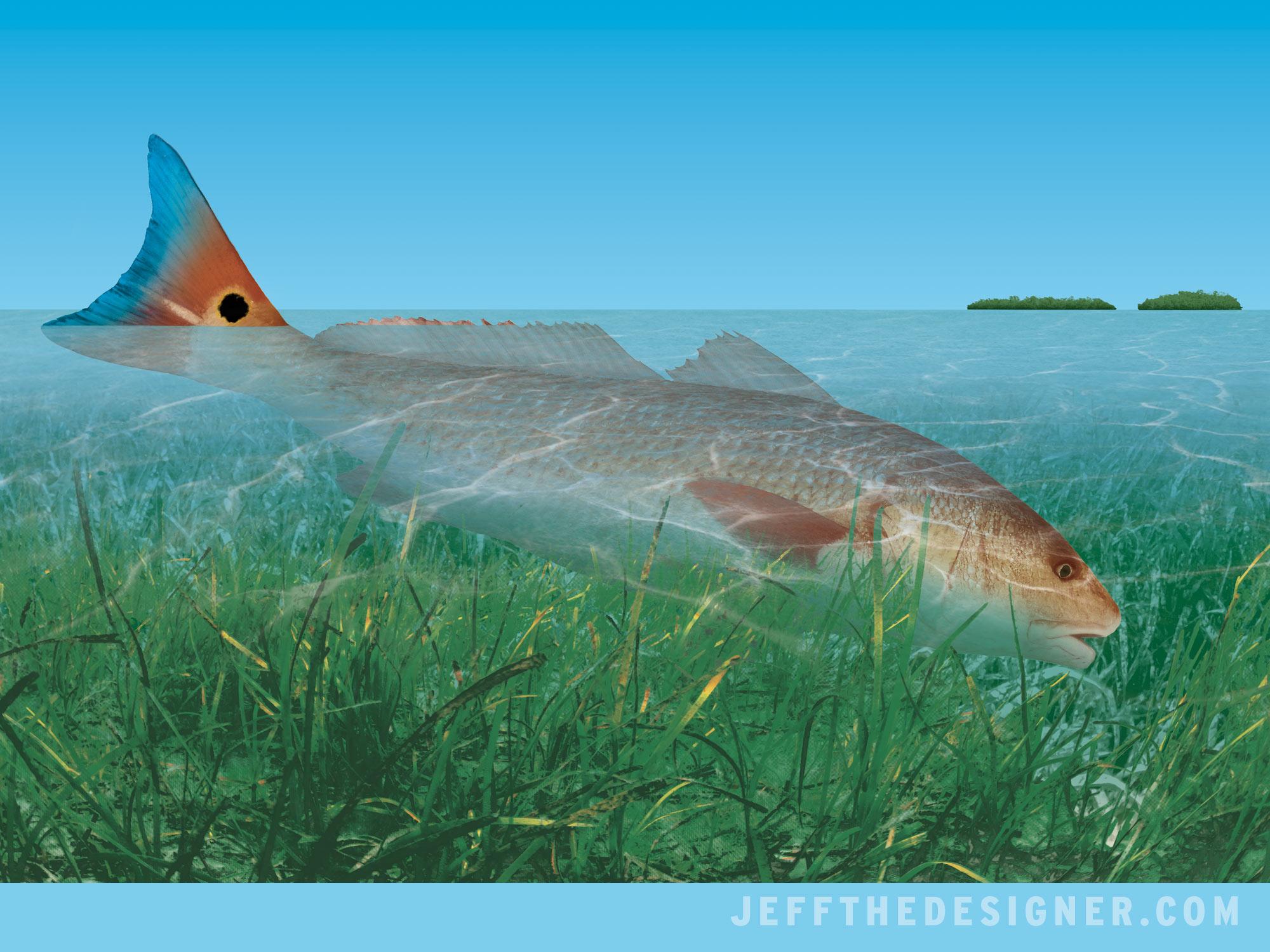 Illustration of a feeding redfish - Florida Keys